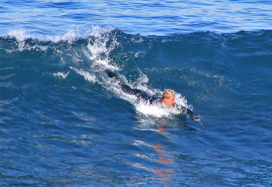 Sunday a.m., December 3, 2006: This body surfer braving the 64 degree water at the La Jolla Cove got a few good rides.