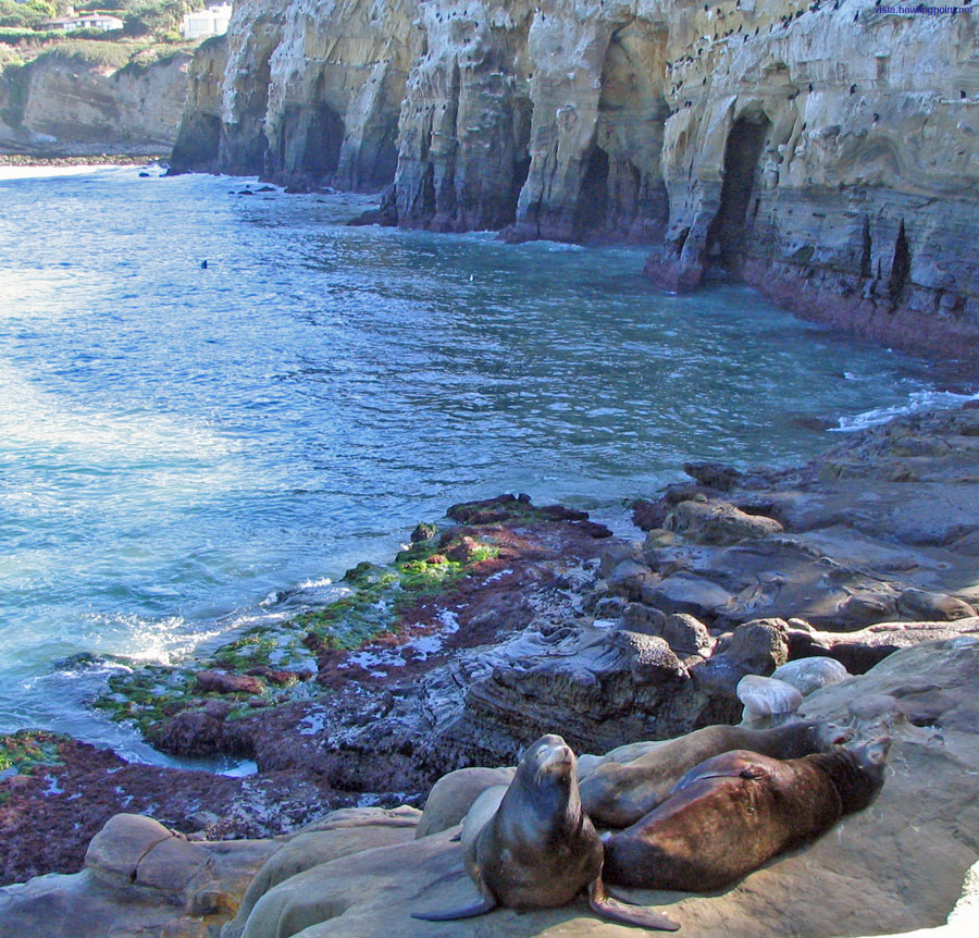 Sea Lions in La Jolla: Sea Lions enjoying a Sunday afternoon on the rocks west of the La Jolla Caves.