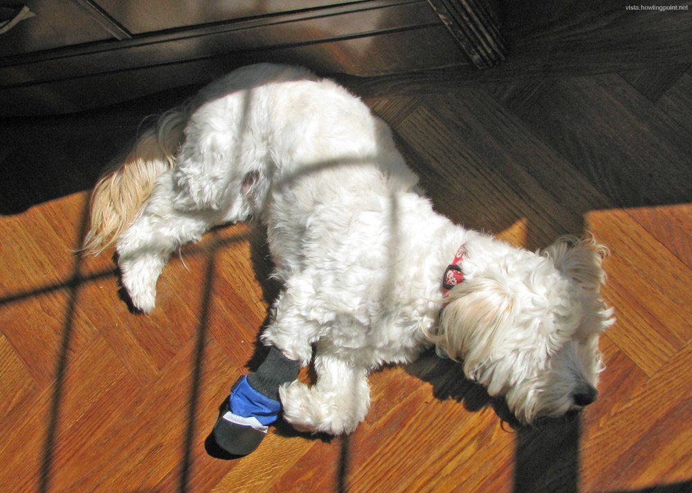 Puppy With One Blue Boot: