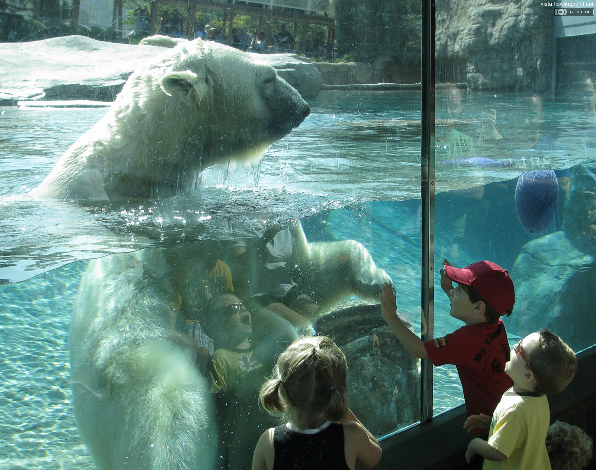 Polar Bear - Checking the menu: Kids look on in amazement as big, white and ferocious checks out the brunch options under the glass.