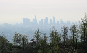Los Angeles Haze