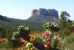 Sedona Roadtrip - June 2016