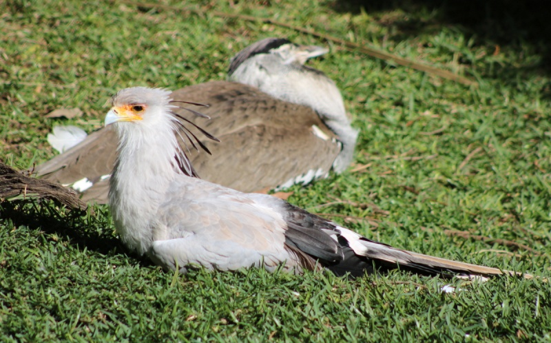 Secretary Bird on break